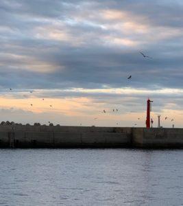 城ヶ島 堤防,鳥山,