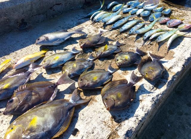 釣果情報・速報の見れる釣具屋さん一覧【全国】
