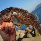 小安漁港のおススメ釣りポイント