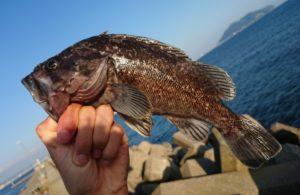 小安漁港 釣り
