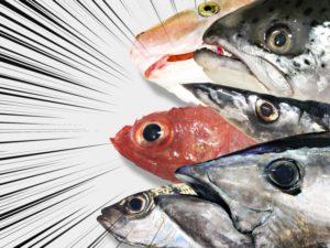 釣れる魚種