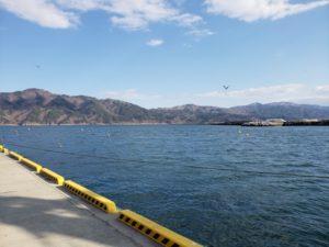 小石浜漁港 釣り