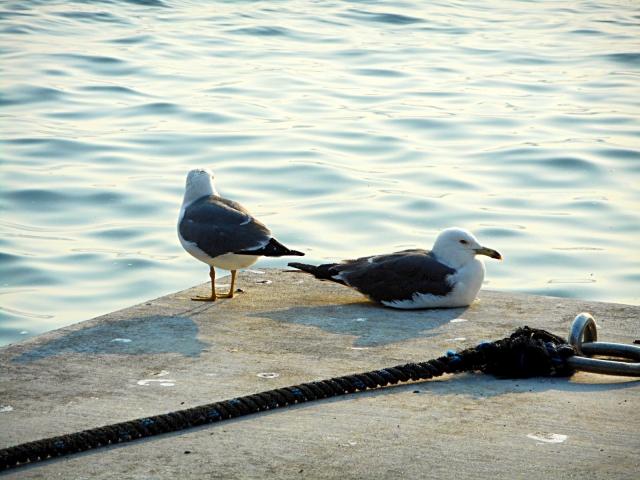 音部漁港のおススメ釣りポイント