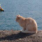 飯田港のおススメ釣りポイント