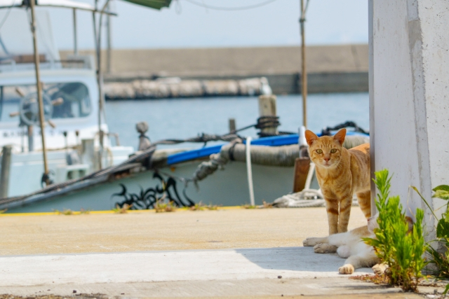 田村漁港のおすすめ釣りポイント